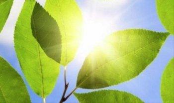 Dùng vi khuẩn biến năng lượng mặt trời thành nhiên liệu lỏng