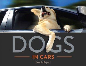 Niềm vui sướng của những chú chó mê tốc độ