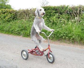 Chú chó mê tốc độ