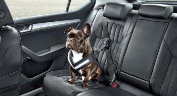 Phụ kiện dành cho… cún cưng đi xe hơi