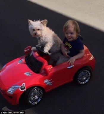 Chú chó lái xe đưa cậu chủ nhỏ đi chơi