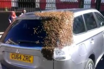 """Hàng nghìn con ong tấn công Mitsubishi Outlander """"cứu chúa"""""""