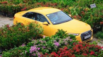 Sedan hạng sang Audi A4 màu bắt mắt chơi Tết