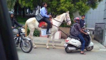Chán cảnh tắc đường, kỹ sư phần mềm cưỡi ngựa đi làm